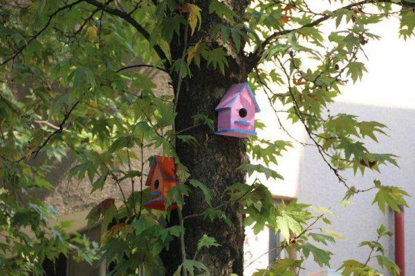 لانه های چوبی پرندگان در شهر لاهیجان 1 600x400 - لانه های چوبی پرندگان در شهر لاهیجان نصب می شود + تصاویر