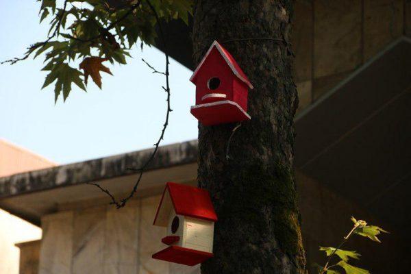 لانه های چوبی پرندگان در شهر لاهیجان 2 600x400 - لانه های چوبی پرندگان در شهر لاهیجان نصب می شود + تصاویر