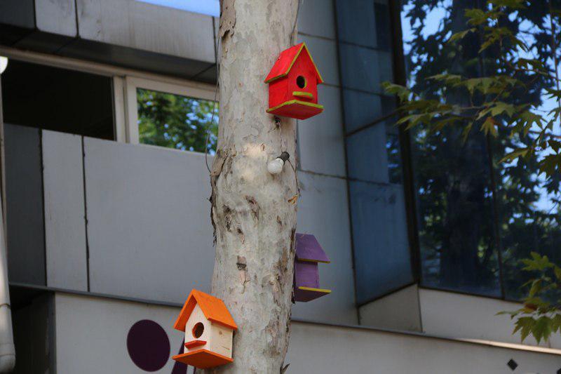لانه های چوبی پرندگان در شهر لاهیجان نصب می شود + تصاویر