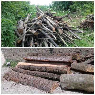 کشف 10 تن چوب جنگلی قاچاق در شفت 400x400 - کشف 10 تن چوب جنگلی قاچاق در شفت