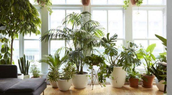 آپارتمانی 600x333 - گیاهان آپارتمانی محبوب با نگهداری آسان