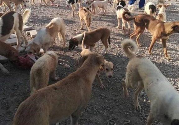 سگ 575x400 - منتشرکننده فیلم آزار سگها بهزودی بازداشت میشود