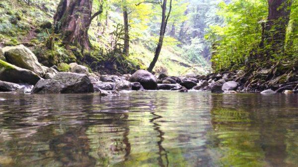 P ۲۰۱۹۰۸۱۶ ۱۷۰۷۴۶ HDR 600x337 - سفری رویایی به آبشار ماهی مشو اطاقور لنگرود / گزارش تصویری