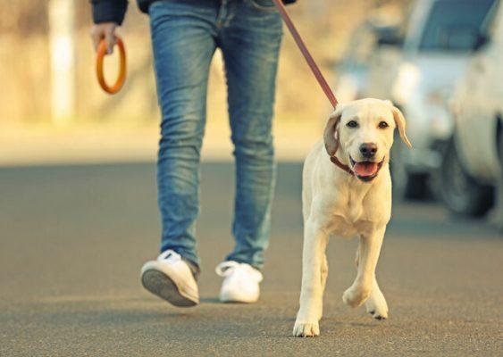 سگ گردانی 563x400 - سگ گردانی فاقد عنوان مجرمانه در قوانین فعلی