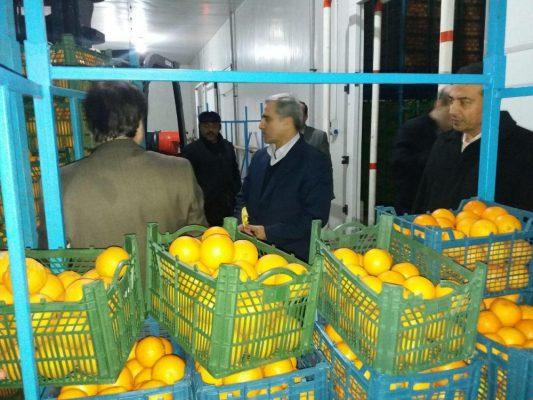میوه دولتی 533x400 - توزیع میوه دولتی از ۲۵ اسفند در گیلان
