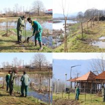 کاشت چهار هزار درخت توسط شهرداری لاهیجان