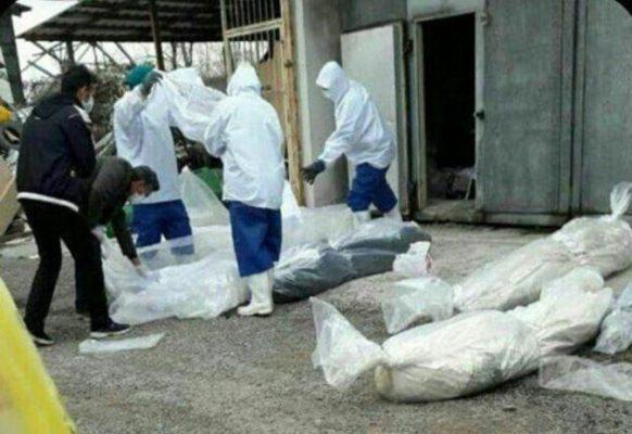 اجساد کرونا 582x400 - اجساد عامل انتقال ویروس کرونا نیستند