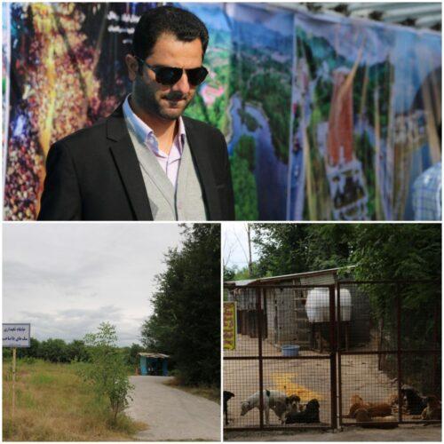 عقیم سازی سگ های بدون صاحب توسط شهرداری لاهیجان 500x500 - عقیم سازی سگ های بدون صاحب توسط شهرداری لاهیجان آغاز شد