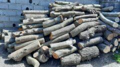 کشف ۸ تن چوب جنگلی قاچاق در رودسر